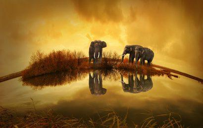 A não ser que os elefantes chorem – João Paulo Hergesel