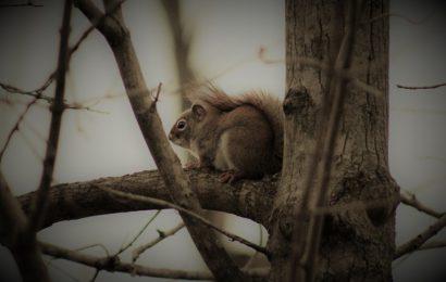 Nectarinas em árvore caída que levou consigo a cada de um esquilo sentimental – João Paulo Hergesel